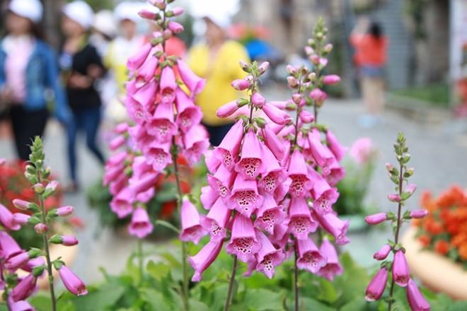 Sắc hoa rực rỡ tại Bà Nà Hills